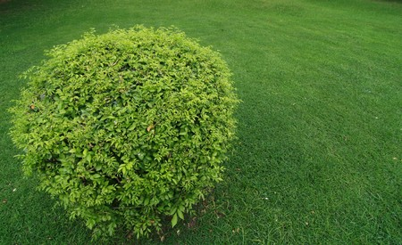 Green bushes in the Royal. Stock Photo - 7712083