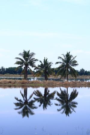 3 reflects the water coconut trees. Stock Photo - 9495789