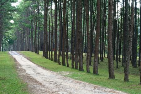 road through row of trees