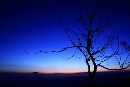 Tree silhouette background in blue  photo