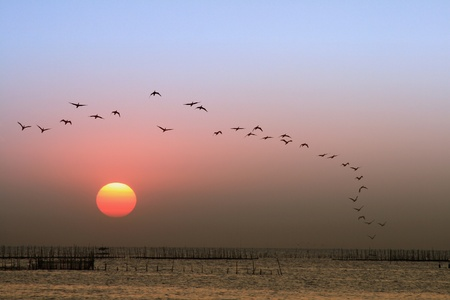 ocean sunset: Sunset, birds flying back to nest Stock Photo