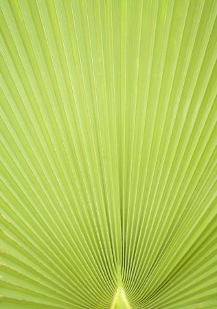 pattern way palm leaves backgroung green Stock Photo - 14629905