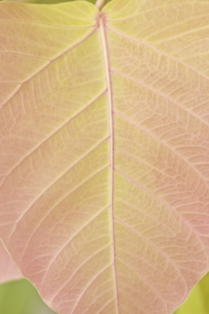 pattern way palm leaves backgroung green Stock Photo - 15174598
