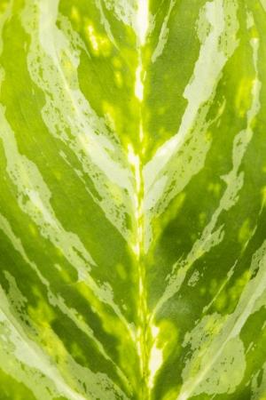 Leaf of a plant close up photo