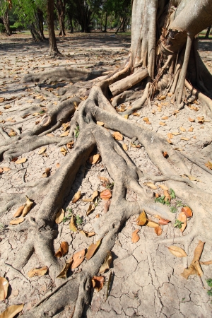 decades: Roots of old trees for decades.