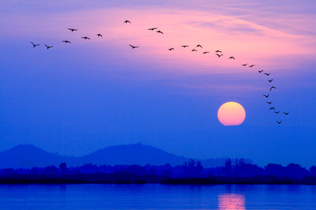 birds fly back to the nest at sunset are silhouette