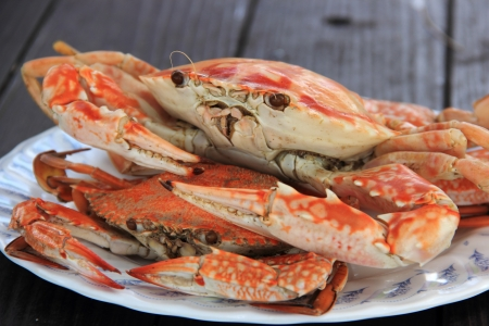 Steam Dungeness crab , ready to eat!  photo