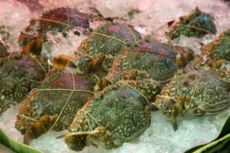 Fesh crab on the ice in the market photo