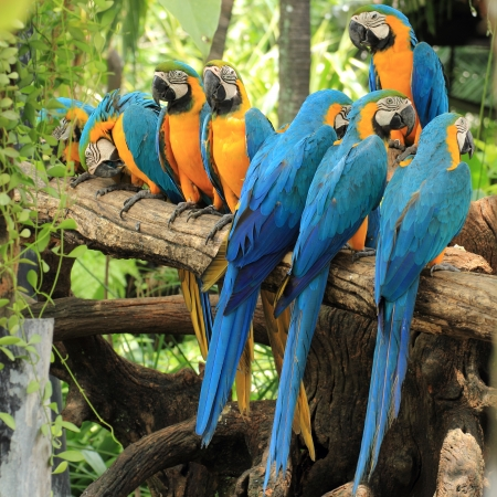 Macaws on the tree Stock Photo