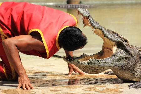 THAILAND, SAMUTPRAKAN -OCT 21, 2013  Traditional for Thailand  Show of crocodiles  The trainer put his head into the jaws of a crocodile on October 21, 2013 in Crocodile Farm SAMTPRAKAN, Thailand  Stock Photo - 23157503