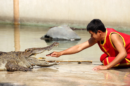 THAILAND, SAMUTPRAKAN -FEB 1, 2014  Traditional for Thailand  Show of crocodiles  The trainer put hand into the jaws of a crocodile on Febuary 1, 2014 in Crocodile Farm SAMTPRAKAN, Thailand  photo