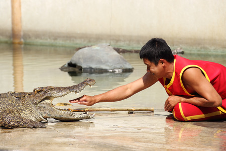 THAILAND, SAMUTPRAKAN - FEB 1, 2014  Traditional for Thailand  Show of crocodiles  The trainer put hand into the jaws of a crocodile on February 1, 2013 in Crocodile Farm SAMTPRAKAN, Thailand