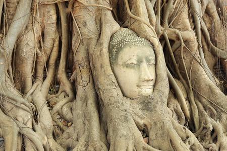 Wat Mahatat Ayutthaya Thailand Buddha head in a tree root photo