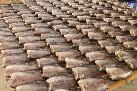 pectoralis: Dried fish in the market of Thailand  Trichogaster pectoralis, Dry fish