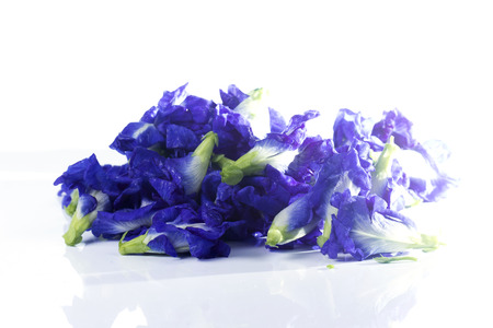 butterfly pea flower on the white background