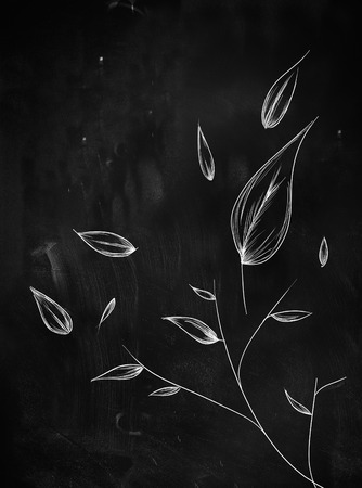 leaves ornament sketch on blackboard photo