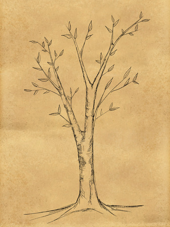 a bough: Branch Tree Sketch on Paper