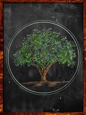 Tree Sketch color leaves on blackboard photo