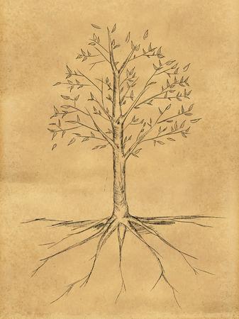 紙の上葉の樹素描 写真素材