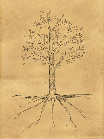 willow tree: Tree Sketch with leaves on paper Stock Photo