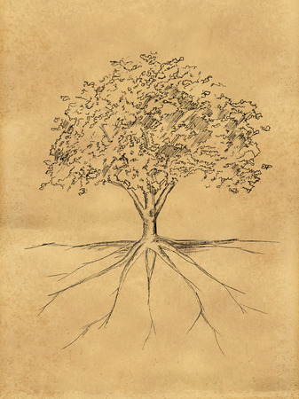 Tree Sketch leaves and root on paper photo