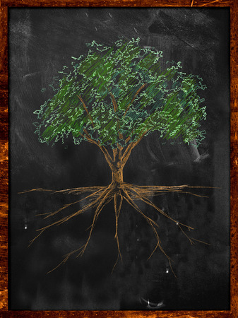 Tree Sketch color leaves and root on blackboard Stock Photo
