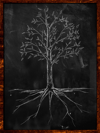 Tree Sketch leaves and root on blackboard photo