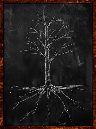 Tree Sketch no leaves root on blackboard photo