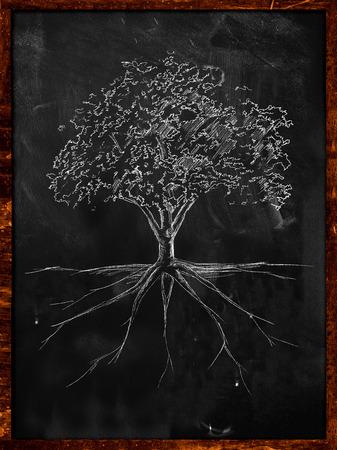 willow tree: Tree Sketch root on blackboard Stock Photo