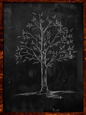 Tree Sketch with leaves on blackboard photo