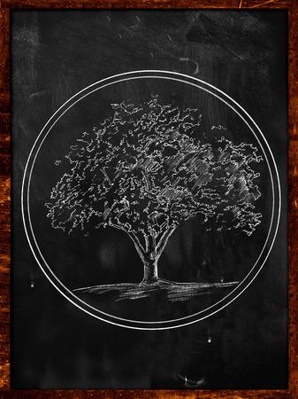 Tree Logo Sketch on Blackboard photo
