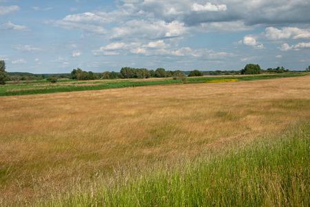 wetland: wetland