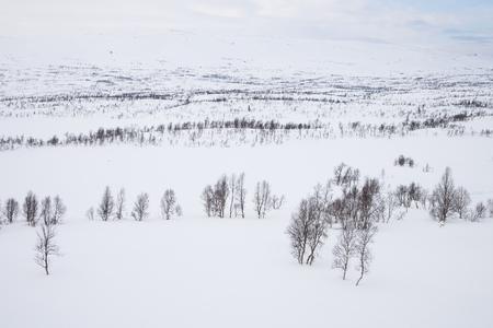 sweden winter: winter landscape in sweden