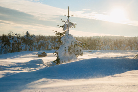 a blizzard: blizzard in a beautiful winter landscape