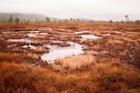bog: a huge bog in finland Stock Photo
