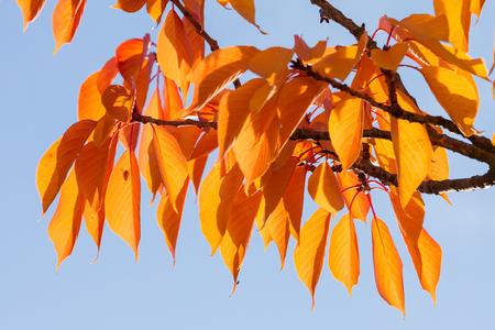 autumn colouring: autumn colouring Stock Photo