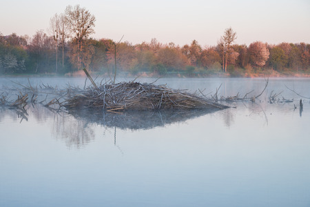 morning mood at a lake with a beaver lodge Stock Photo