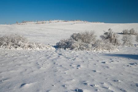republik: beautiful sunny winter day