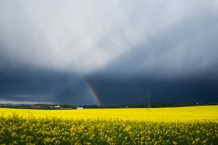a yellwo rape field with a rainbow, dark clouds and an electrical power line in background Stock Photo