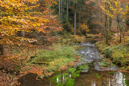 czech switzerland: Piccolo fiume Kirnitzsch in autunno in Svizzera Sassonia Archivio Fotografico