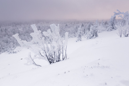 erzgebirge: Foggy winter landscape in Germany in the morning Stock Photo