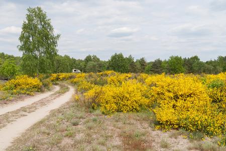 Flowering heath landscape in germany