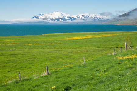 fjord landscape in iceland in summer Stock Photo