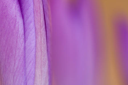 Close-up of a purple flower in a farm Stock Photo