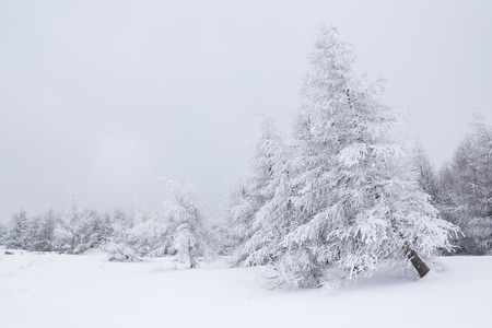 Beautiful white winter landscape Stock Photo