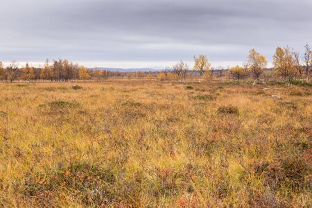 Autumn colors in northern Finland