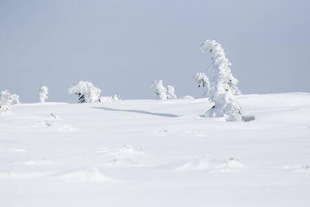 Winter landscape in Krkonose (Poland, Czech Republic) Standard-Bild