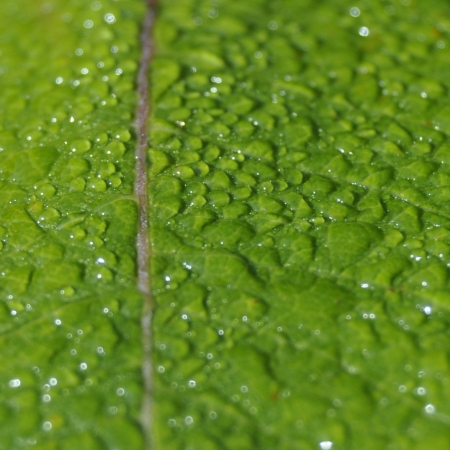 Green and wet photo