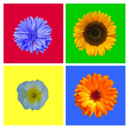 compilation of four to bleed red green yellow and blue background photo