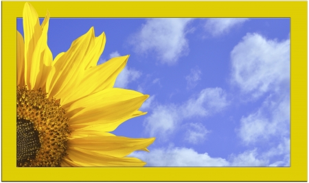 nice yellow sun flower in front of blue cloudy sky with orange frame photo